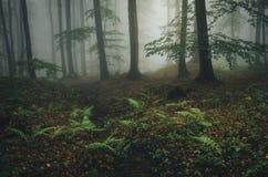 Δάσος φαντασίας Enchanted με την ομίχλη και την πράσινη φτέρη Στοκ Φωτογραφίες