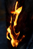 δάσος φλογών πυρκαγιάς στρατοπέδευσης Στοκ Φωτογραφία