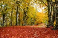 δάσος χρυσό στοκ φωτογραφίες με δικαίωμα ελεύθερης χρήσης