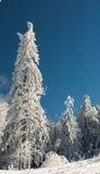 δάσος χωρών των θαυμάτων Στοκ Φωτογραφία