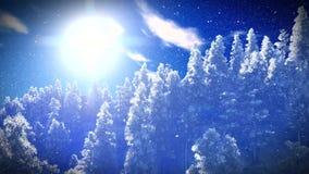 Δάσος Christmac στα βουνά απόθεμα βίντεο