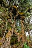 δάσος mossy στοκ εικόνες