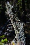 δάσος mossy Στοκ Φωτογραφίες