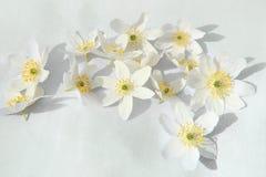 Άσπρα άγρια λουλούδια στο υλικό λινού Στοκ Εικόνες