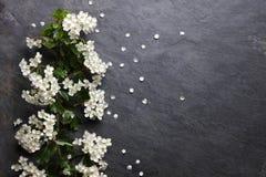 Άσπρα άνθη λουλουδιών αρχών του καλοκαιριού στοκ εικόνα