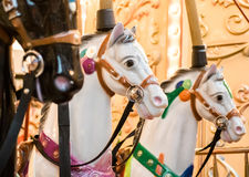 Άσπρα άλογα ιπποδρομίων Στοκ Εικόνες