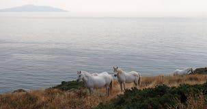 Άσπρα άλογα σε Anglesey, Ουαλία Στοκ φωτογραφία με δικαίωμα ελεύθερης χρήσης