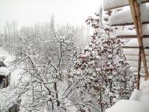 Άσπρα δέντρα λόγω του χιονιού Στοκ Εικόνα