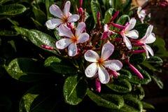 Άσπρα ανθίζοντας δέντρα κινηματογραφήσεων σε πρώτο πλάνο λουλουδιών Στοκ Εικόνες