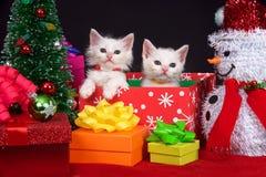 Άσπρα γατάκια στα χριστουγεννιάτικα δώρα Στοκ Φωτογραφία