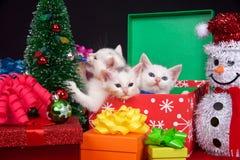 Άσπρα γατάκια στα χριστουγεννιάτικα δώρα Στοκ Εικόνα