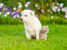 Άσπρα ελβετικά κουτάβι και γατάκι ποιμένων ` s που κοιτάζουν στις διαφορετικές κατευθύνσεις στην πράσινη χλόη στοκ εικόνες