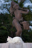 Άσπρα θηλυκά καθίσματα γατών του Maine coon Στοκ εικόνες με δικαίωμα ελεύθερης χρήσης