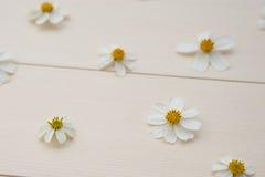 Άσπρα ισπανικά λουλούδια βελόνων Στοκ Εικόνες