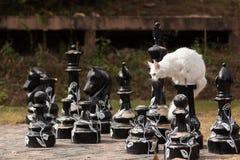 Άσπρα καθίσματα γατών του Maine coon στο μεγάλο σκάκι Στοκ φωτογραφία με δικαίωμα ελεύθερης χρήσης