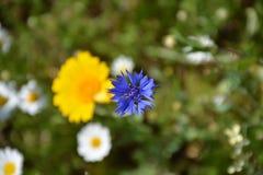Άσπρα και κίτρινα, μπλε λουλούδια άνοιξη και δέντρο στην Τουρκία Στοκ Εικόνες