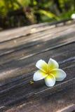 Λουλούδια Frangipani με το ξύλο στο υπόβαθρο. Στοκ Εικόνες