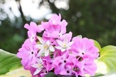 Άσπρα και ρόδινα λουλούδια στοκ φωτογραφίες