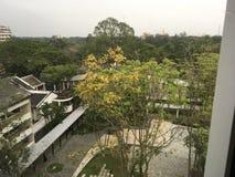 Άσπρα κτίρια γραφείων ανάμεσα στα τροπικά πράσινα δέντρα στοκ εικόνα με δικαίωμα ελεύθερης χρήσης