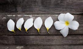 Άσπρα λουλούδια και πέταλα Στοκ Εικόνες