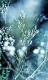Άσπρα λουλούδια ομορφιάς Στοκ Εικόνες