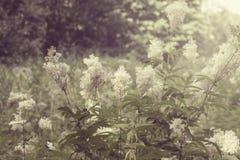 Άσπρα λουλούδια που αυξάνονται άγρια στο δασικό θέμα έννοιας καλοκαιριού και άνοιξης Στοκ Εικόνες