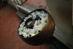 Άσπρα λουλούδια που επιπλέουν στο κύπελλο Ταϊλανδός ουσιαστικού πετρελαίου aromatheraphy Στοκ Εικόνες