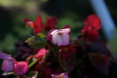 Άσπρα λουλούδια σε ένα δέντρο μεταξύ των πράσινων φύλλων στοκ φωτογραφία με δικαίωμα ελεύθερης χρήσης