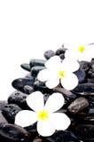 Άσπρα λουλούδια στις μαύρες πέτρες zen Στοκ Εικόνες