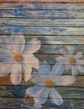 Άσπρα λουλούδια στο παλαιό ξύλινο υπόβαθρο πινάκων Στοκ Εικόνες