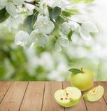 Άσπρα λουλούδια της Apple, πράσινα φύλλα και φρούτα της Apple Στοκ Φωτογραφίες