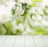 Άσπρα λουλούδια της Apple, πράσινα φύλλα, φως Bokeh Στοκ Φωτογραφίες