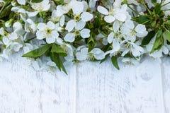 Άσπρα λουλούδια του κερασιού στους λευκούς, ξύλινους πίνακες, κλάδοι του ανθίζοντας κερασιού E στοκ εικόνα με δικαίωμα ελεύθερης χρήσης