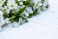 Άσπρα λουλούδια του κερασιού στους λευκούς, ξύλινους πίνακες, κλάδοι του ανθίζοντας κερασιού E στοκ εικόνα