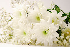 Άσπρα λουλούδια Στοκ εικόνες με δικαίωμα ελεύθερης χρήσης