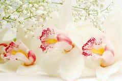 Άσπρα λουλούδια Στοκ εικόνα με δικαίωμα ελεύθερης χρήσης