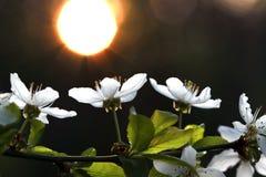 Άσπρα λουλούδια Στοκ Φωτογραφίες
