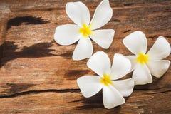 Άσπρα λουλούδια Frangipai Plumeria στο ξύλινο υπόβαθρο πατωμάτων Στοκ φωτογραφία με δικαίωμα ελεύθερης χρήσης