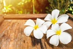 Άσπρα λουλούδια Frangipani Plumeria στο ξύλινο πάτωμα το πρωί s Στοκ φωτογραφίες με δικαίωμα ελεύθερης χρήσης