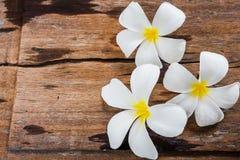 Άσπρα λουλούδια Frangipani Plumeria στο ξύλινο υπόβαθρο πατωμάτων Στοκ φωτογραφίες με δικαίωμα ελεύθερης χρήσης