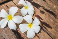 Άσπρα λουλούδια Frangipani Plumeria στο ξύλινο υπόβαθρο πατωμάτων Στοκ Εικόνες