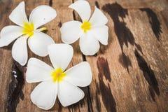 Άσπρα λουλούδια Frangipani Plumeria στο ξύλινο υπόβαθρο πατωμάτων Στοκ εικόνα με δικαίωμα ελεύθερης χρήσης