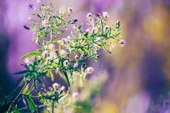 Άσπρα μικρά λουλούδια νεράιδων στο ζωηρόχρωμο ονειροπόλο μαγικό κίτρινο κόκκινο μουτζουρωμένο υπόβαθρο Στοκ εικόνες με δικαίωμα ελεύθερης χρήσης