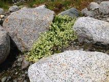 Άσπρα μικρά λουλούδια Στοκ εικόνες με δικαίωμα ελεύθερης χρήσης