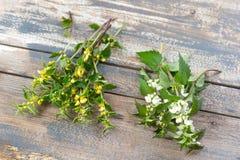 Άσπρα νεκρά nettle κίτρινα ανθίζοντας νεκρός-nettles, στον παλαιό ξύλινο πίνακα στοκ φωτογραφίες