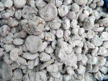 Άσπρα ξηρά σύκα στοκ εικόνα με δικαίωμα ελεύθερης χρήσης