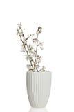 Άσπρα λουλούδια άνοιξη Στοκ Εικόνες