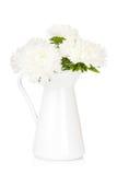 Άσπρα λουλούδια αστέρων Στοκ Εικόνες
