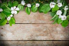 Άσπρα λουλούδια και πράσινη ρύθμιση φύλλων σε έναν ξύλινο πίνακα Στοκ Φωτογραφία