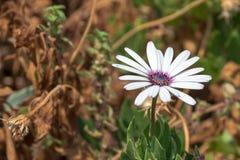 Άσπρα λουλούδια με πράσινο Στοκ φωτογραφία με δικαίωμα ελεύθερης χρήσης
